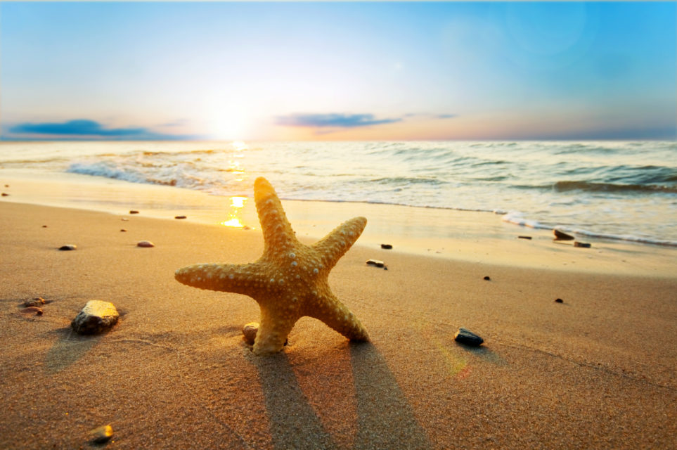 A UNIQUE INTERNATIONAL ADOPTION STORY THAT BEGAN WITH STARFISH