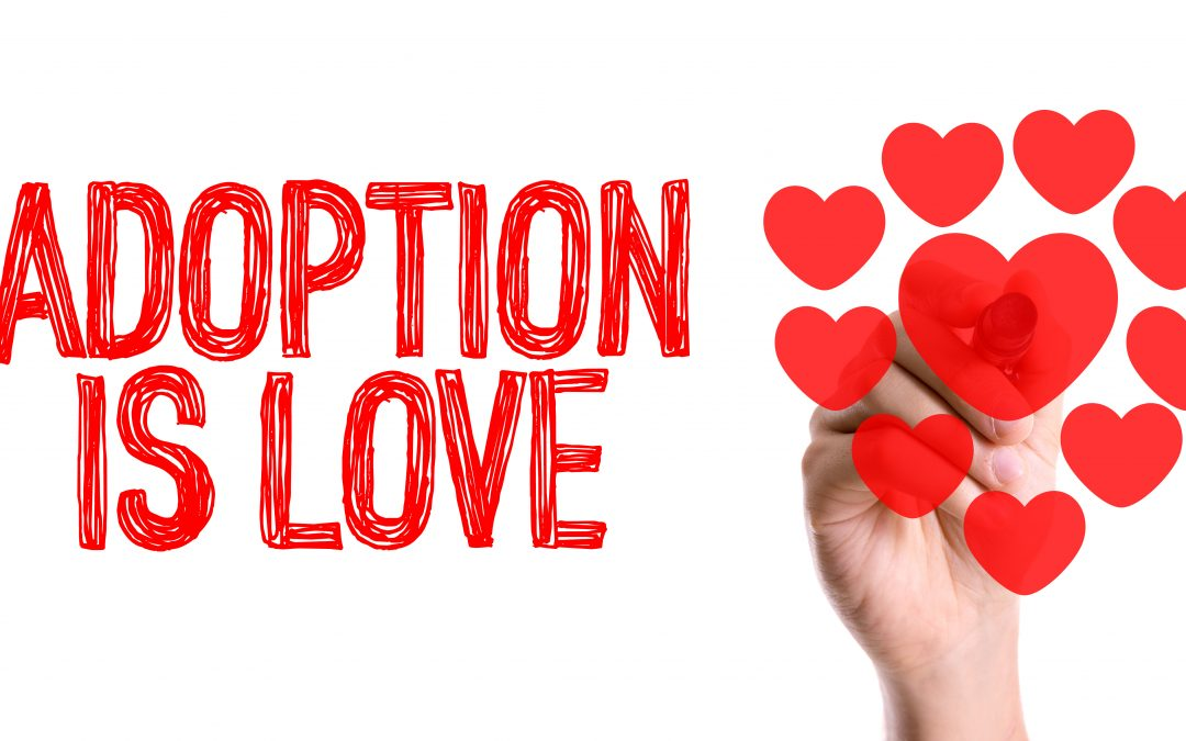 Are All Adoption Agencies the Same?